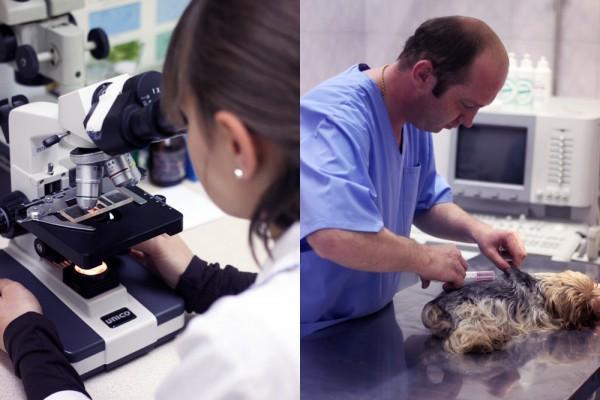 Ветеринарная клиника «ЭКСПЕРТ»